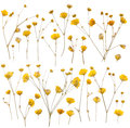Pressed yellow wildflowers Royalty Free Stock Photo