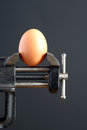 Pressure concept hen s egg pressured bench vice dark background Stock Images