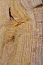 Pressure treated wood closeup or background texture Stock Photography