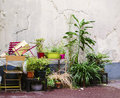 Pretty area in decaying grungy courtyard in paris plants brighten up a corner of a dismal slum with cracked walls Royalty Free Stock Photography