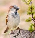 Pretty bird Royalty Free Stock Photography