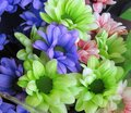 Pretty Bright Closeup Green Blue And Pink Daisy Flowers Bouquet Royalty Free Stock Photo