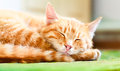 Pretty cat sleep peaceful orange red tabby male kitten curled up sleeping Stock Images