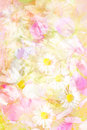 Pretty daisies artistic background in yellow and pink Royalty Free Stock Images