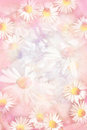 Pretty daisies grungy background in pink Royalty Free Stock Photo