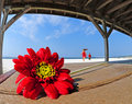Pretty flower in beach shelter Royalty Free Stock Photography