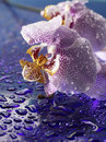Pretty flowers subtle violet white and pink o a reflective surface covered with water drops Royalty Free Stock Photos