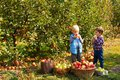 Pretty kids eat fruits at fall harvest Royalty Free Stock Photo