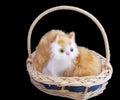 Pretty kitten in basket over black Stock Photo