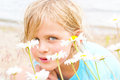 Pretty little blond girl in a patch of daisies on the beach Stock Images