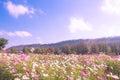 Pretty Manicured Flower Garden...