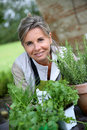 Pretty mature woman gardening for pleasure senior preparing aromatic herbs in pot Royalty Free Stock Images