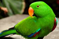 Pretty parrot shows off its pretty colors photographer Royalty Free Stock Image