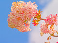 Pretty pink flower with the blue sky Royalty Free Stock Images