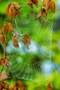 A pretty scary frightening spider web for halloween Stock Images