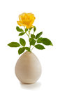 A pretty single yellow rose on a stem with green leaves in a gray or white clay vase on white background closeup stems and an oval Royalty Free Stock Photography