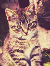 Pretty striped kitten photo of cute vintage background Royalty Free Stock Photo
