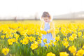 Pretty toddler girl field of yellow daffodil flowers beautiful curly in a blue dress playing in a on a sunny summer evening Royalty Free Stock Photography