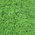 Pretty top view of fresh green grass and lovely weed ground Royalty Free Stock Photo