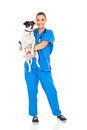 Pretty vet doctor holding pet dog isolated white Stock Images