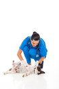 Pretty veterinarian checking pet dog s skin isolated white Stock Image