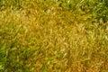 Pretty wispy weeds