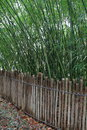 Pretty wood fencing with bamboo background Royalty Free Stock Photo