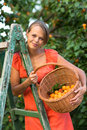 Pretty young woman picking apricots lit by warm summer evening Stock Images