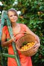 Pretty young woman picking apricots lit by warm summer evening light shallow dof color toned image Stock Photo