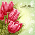 Preview background bouquet of pink tulips for your text Stock Photography