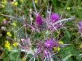 Prickle spring in crete macro Stock Photo