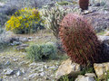 Prickly cacti in nevada desert Stock Photography