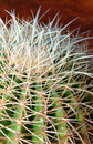 Prickly Cactus Stock Photography