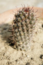 Prickly cactus closeup shot Stock Photo