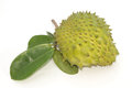 Prickly custard apple fruit annona muricata l soursop Royalty Free Stock Images