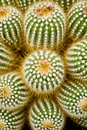 Prickly Group Stock Photography