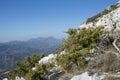 Prickly juniper juniperus oxycedrus cedar cade sharp cedar spanish cedar is a Royalty Free Stock Image
