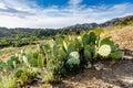 Prickly Pear - Orange County, California Royalty Free Stock Photo