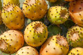 Prickly pears fruit typical of the mediterranean Royalty Free Stock Photo