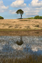 Priddy Pond near Cheddar, Somerset UK Royalty Free Stock Photo