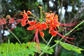 Pride of Barbados Royalty Free Stock Image