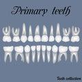 Primary teeth