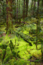 Primeval forest Stock Photos