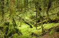 Primeval forest Royalty Free Stock Photography