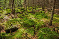 The primeval forest with mossed ground Royalty Free Stock Photos