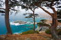 Primorye, centennial cedar on a rocky beach Royalty Free Stock Photography