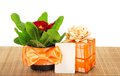 Primula on bamboo cloth, gift box and card Royalty Free Stock Photo