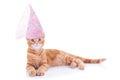 Princess cat halloween fairy kitten Stock Photos