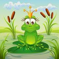 Princess frog sitting on leaf of water lily Royalty Free Stock Photo