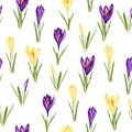 Violet and yellow crocuses flowers seamless pattern. Watercolor style Illustration.
